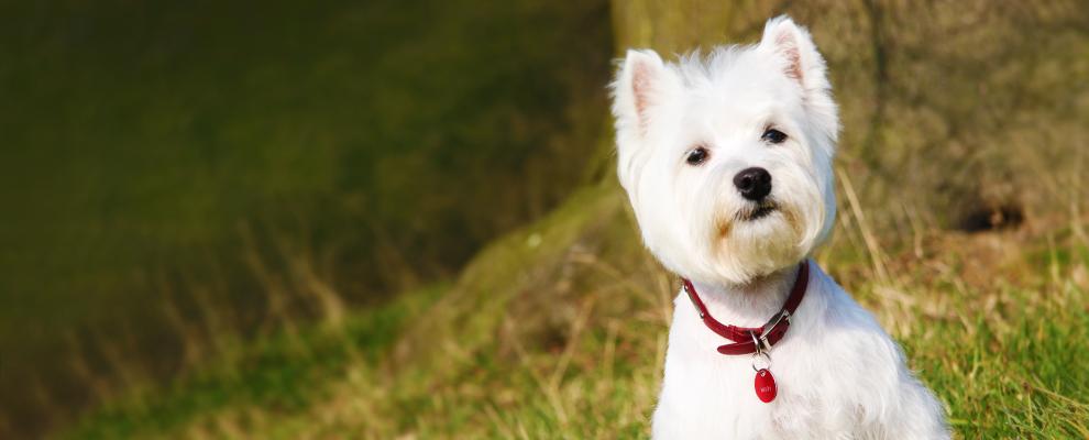 Buckinghamshire Dog Kennels